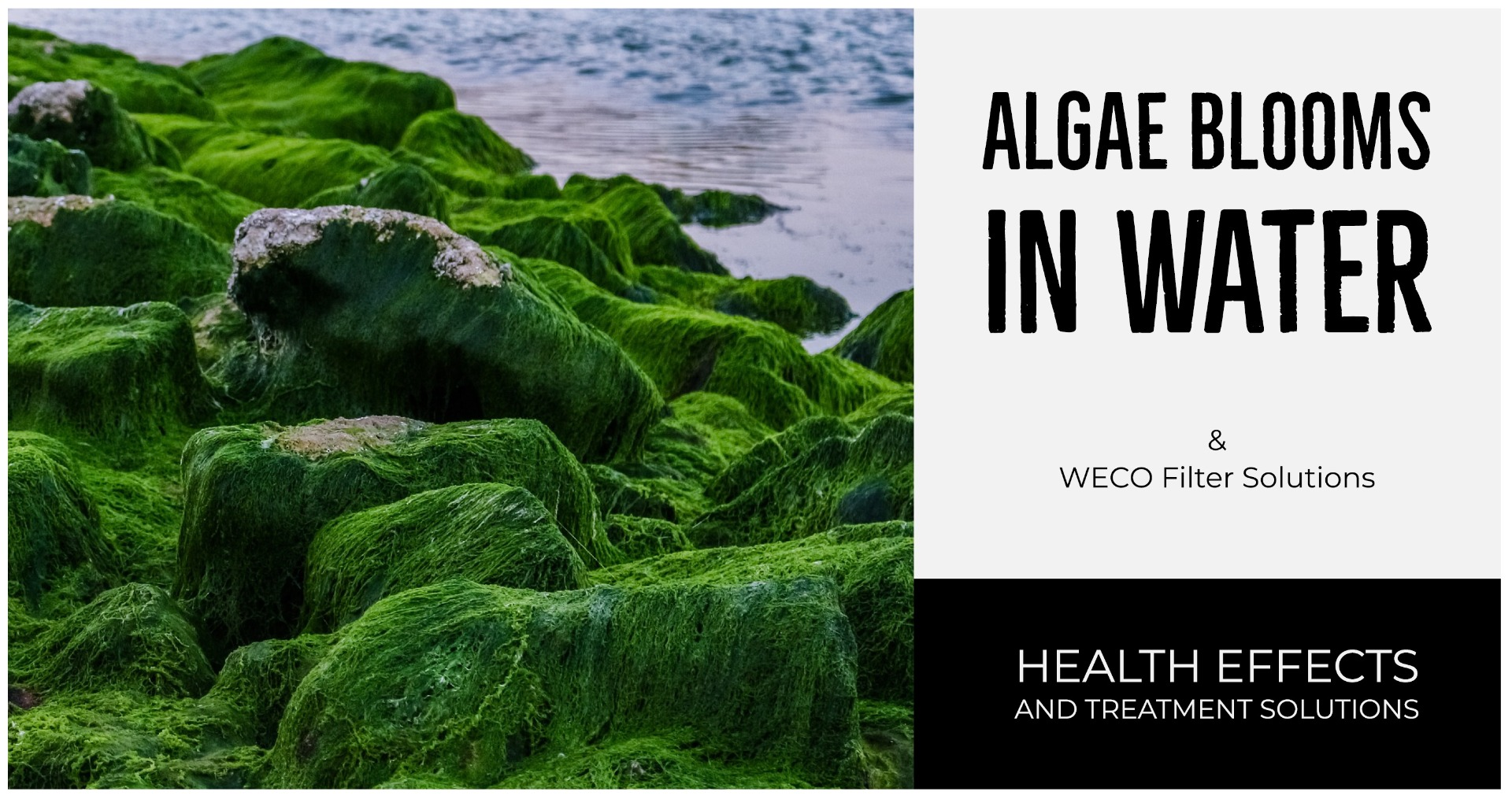 Algae in Water