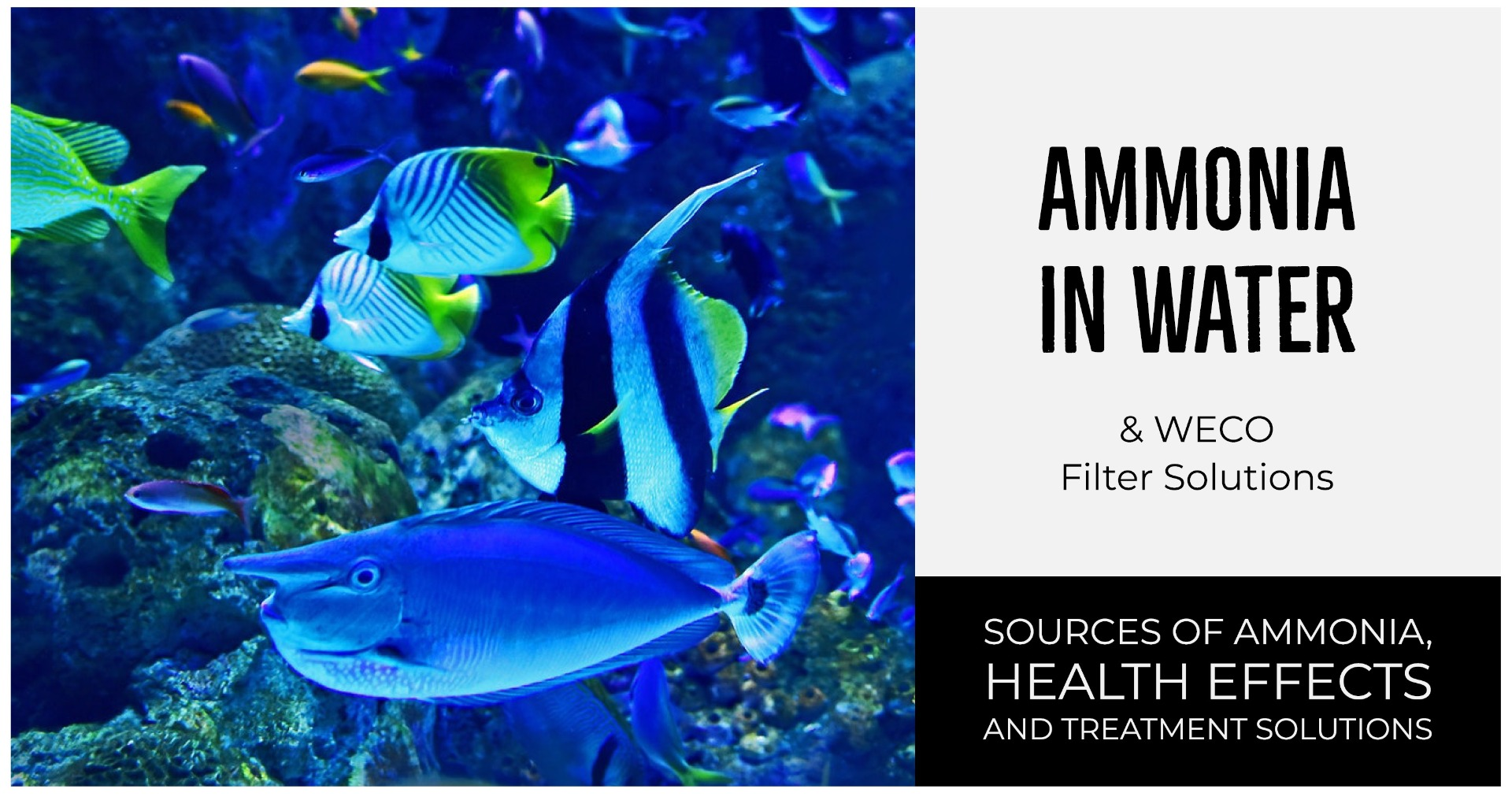 Ammonia is toxic to fish and aquatic wildlife